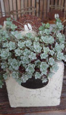 Grünpflanze mit frechem Engel